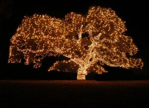 albero natale esterno